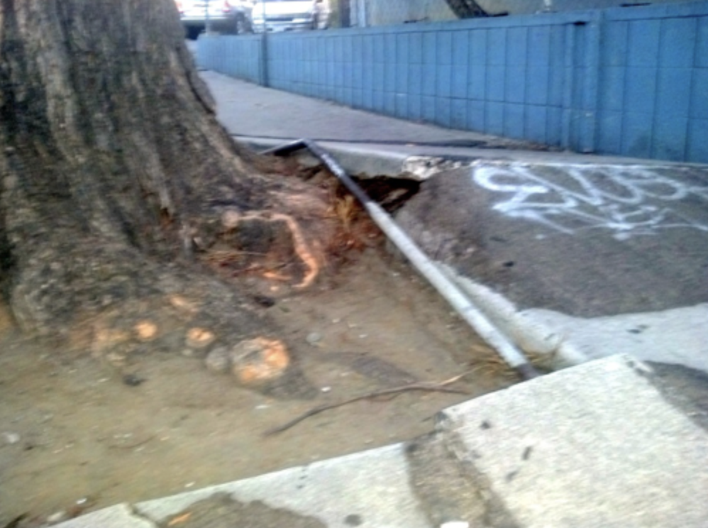 Tree Root Problems